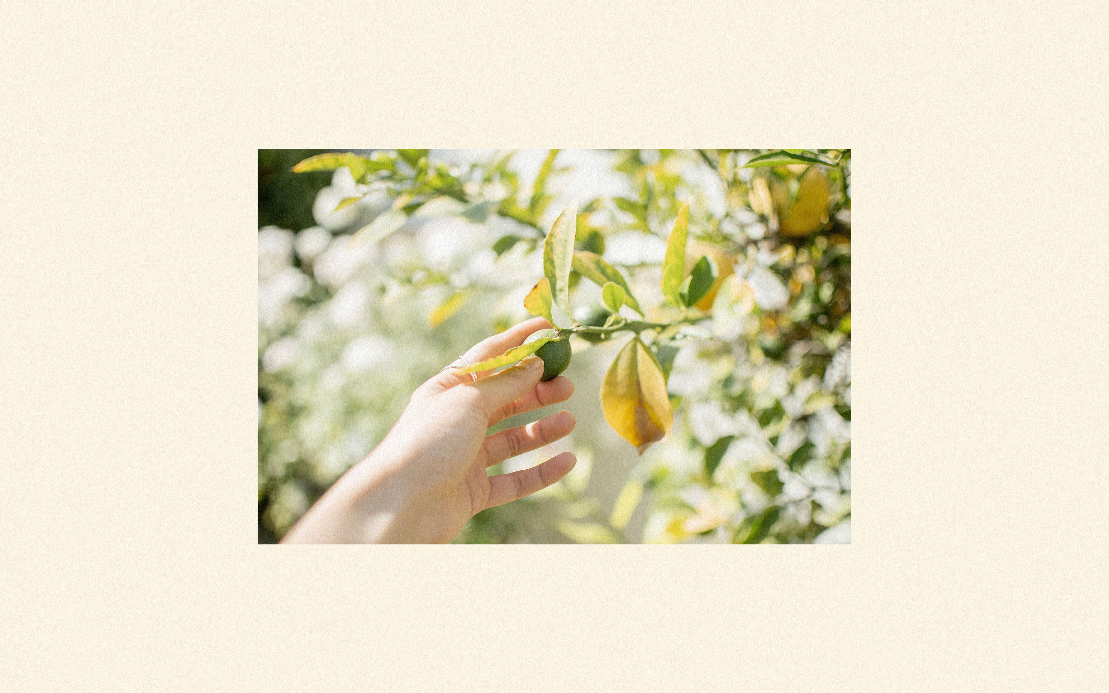 Rey-Limon-014